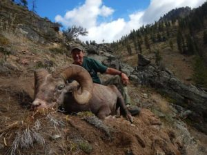 Bighorn Sheep Tags